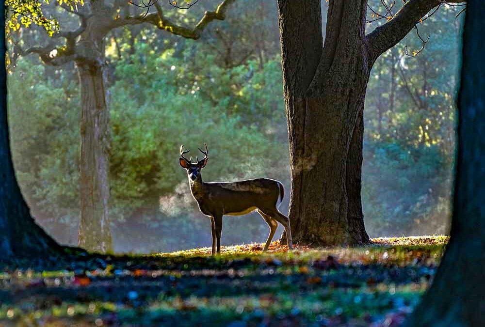 Buck Breath-Outdoor Photographer - Photographic Portals Assignment
