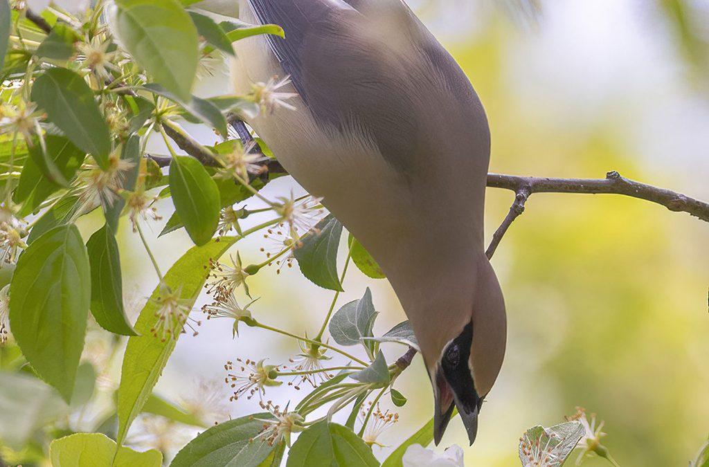 Spring Mammals, Amphibians And More Assignment Winner